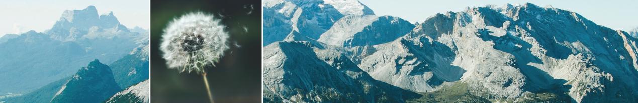Mountain-and-dandilion-spread